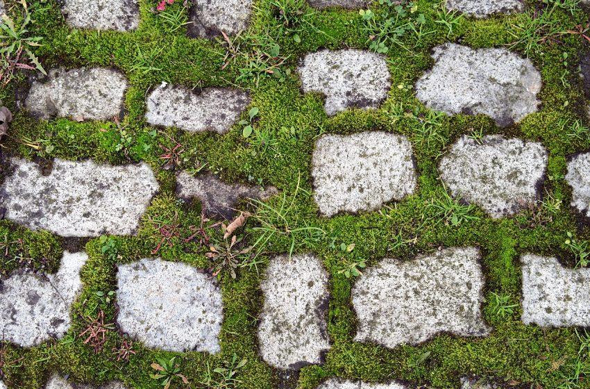 Третиране срещу плевели ще се проведе в землището на Плевен