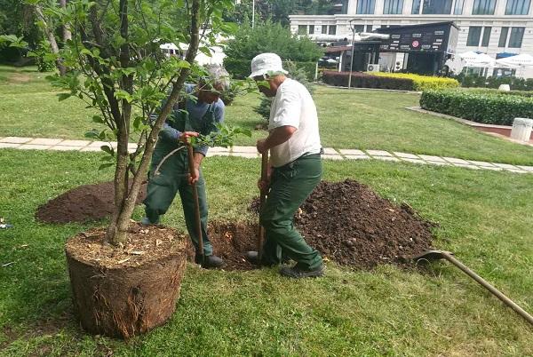 """Градински център """"Тис"""" дари на Столична община дървета и храсти за Южния парк"""